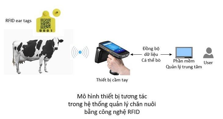 Quản lý chăn nuôi bò bằng RFID